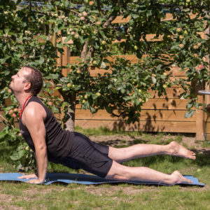 Upwardfacing dog in June 27th 2018. The  Upwardfacingdog  Urdhva Mukha Svanasana is well-known from sun salutations and vinyasa practice. In vinyasa, it gives a nice back stretch, and I use to pause my vinyasa for one or two breaths there.